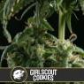 Girl Scout Cookies (Blimburn Seeds)