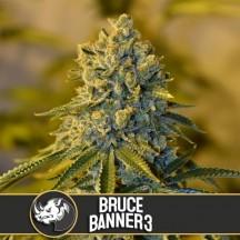 Bruce Banner 3 (Blimburn Seeds)