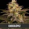 Chocolópez (Blimburn Seeds)