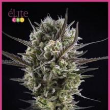 Llimonet Haze Clásica CBD (Elite Seeds)