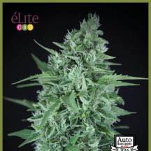 La Rica Auto CBD (Elite Seeds)