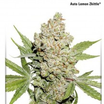 Auto Lemon Zkittle (Dutch Passion)