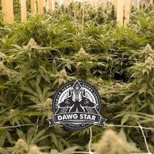 Ewok (Dawg Star)