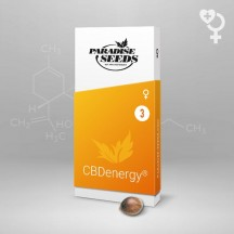 CBDenergy (Paradise Seeds)