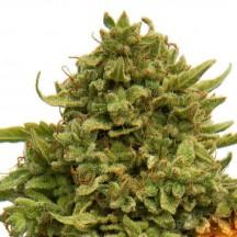 Pineapple Chunk (Barney´s Farm)