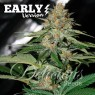 Delicious Candy F1 (Delicious Seeds)