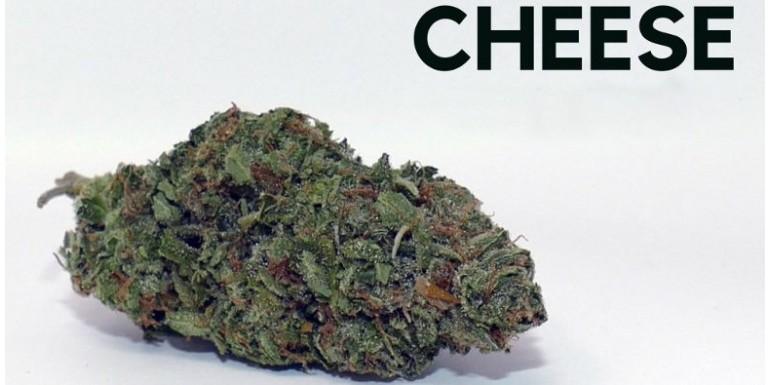 Marihuana Cheese: Historia y variedades representativas