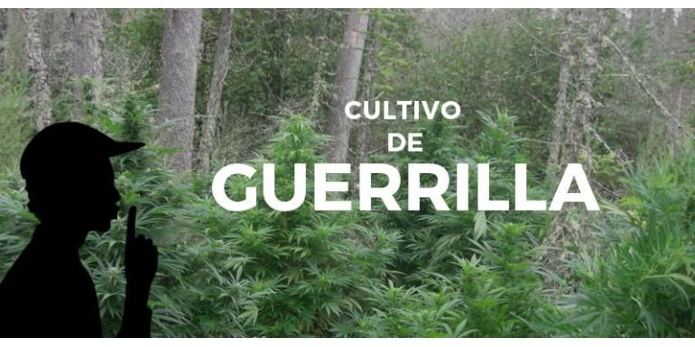 Manual para el cultivo de guerrilla con marihuana