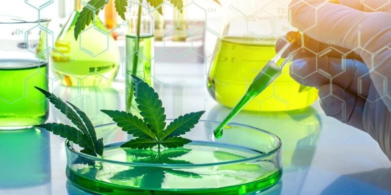 THCP: El nuevo cannabinoide 30 veces más potente que el THC