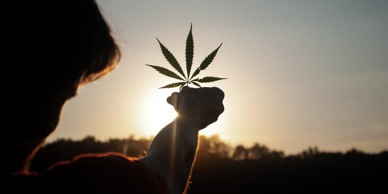 ¿Qué información nos da la hoja de Marihuana? Síntomas, Alarmas