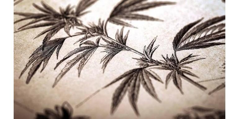 Los 8 principales mitos sobre la marihuana