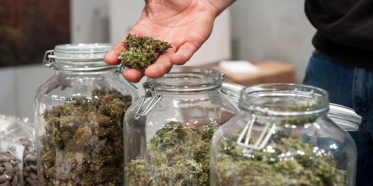 Clases y Tipos de Marihuana   Todo lo que debes saber